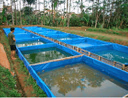 Image result for cara budidaya ikan patin