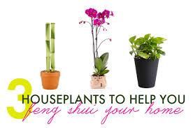 3 feng shui house plants best office plants no sunlight