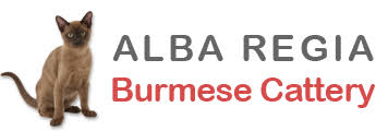 Alba Regia Dracula and Tenor   Alba Regia <b>Burmese</b> Cattery ...