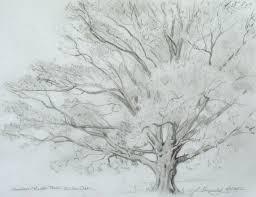 Imagini pentru tree draw