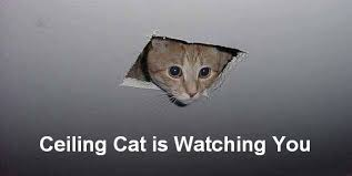 Our Picks for the 10 Best Cat Memes of All Time   Pet Naturals Blog via Relatably.com