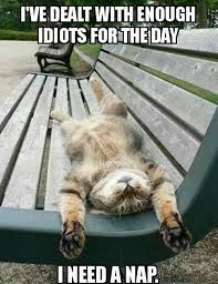 Tired Cat | Funny Pictures, Quotes, Memes, Jokes via Relatably.com