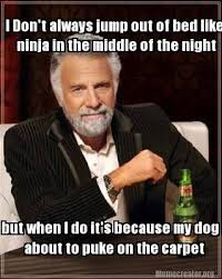 Dog memes on Pinterest | Doge, Doge Meme and Ninjas via Relatably.com