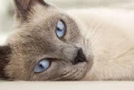 Il colore del pelo rivela il carattere del gatto Images?q=tbn:ANd9GcRuqEpnPXoODdHfYmkWV8lKAaabf_b28VR0G47hOFsaz22nrMBg0g