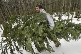 Where you can cut down your own Christmas tree in Colorado