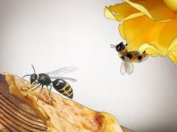 3 Ways to Identify <b>Wasps</b> - wikiHow