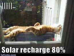 Solar Energy Cat Meme Generator - Captionator Caption Generator ... via Relatably.com
