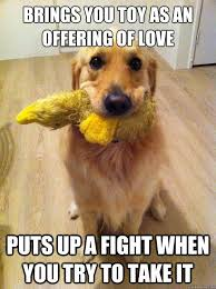 Funny Golden Retriever Memes (1) - Funny Images and Funny Pictures via Relatably.com