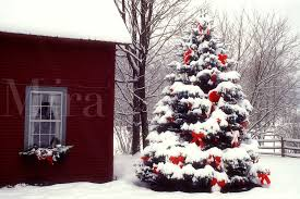 Image result for snow on trees with red ribbons