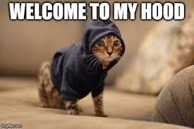 Hoody Cat Meme - Imgflip via Relatably.com