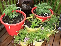 patio vegetable garden ideas container gardening