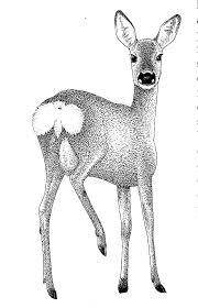 """Résultat de recherche d'images pour """"chevreuil"""""""