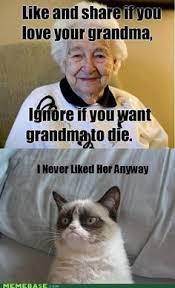 Funny on Pinterest | Grumpy Cat, Meme and Grumpy Cat Quotes via Relatably.com