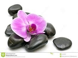 """Résultat de recherche d'images pour """"orchidée"""""""