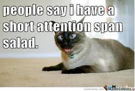 Crazy Cat by cosmin10 - Meme Center via Relatably.com