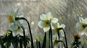 Image result for free rain wallpapers