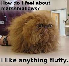 Fluffy Cat meme on imgfave via Relatably.com