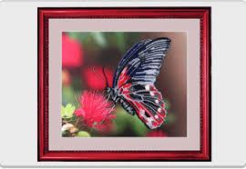 Компания <b>Butterfly</b> - украинский производитель наборов для ...