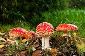 <b>Autumn Holidays</b> 2020, <b>Holiday</b> Homes near Veluwemeer, The ...