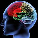 Kết quả hình ảnh cho hệ thống thần kinh trung ương