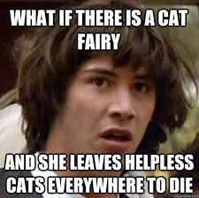 What if there is a cat fairy and she leaves helpless cats ... via Relatably.com