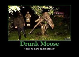 Funny Hangover Quotes and Sayings moose-drunk-funny-hangover-cure ... via Relatably.com