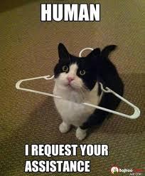 cat-request-human-assistance-funny-meme-pics.jpg via Relatably.com