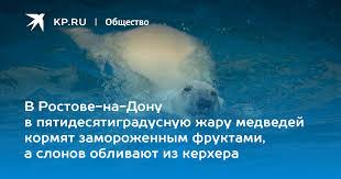 В Ростове-на-Дону в пятидесятиградусную жару медведей ...