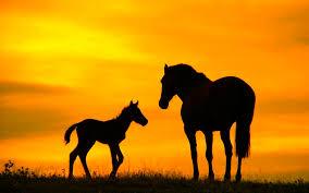 Resultado de imagen de fondos de caballos