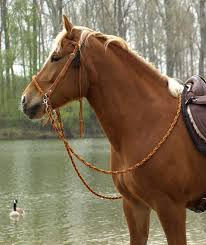 'Amber' <b>Bridle 2</b>-in-1 | barefoot-<b>saddle</b>