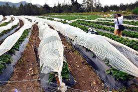 Resultado de imagen para fotos de agricultura en Valle Nuevo en Constanza