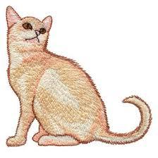 <b>Burmese Kitten</b>