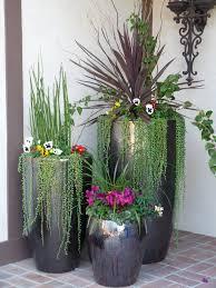 tropical indoor plants home design decor