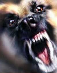 Znalezione obrazy dla zapytania atak  psów