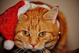 200+ Free <b>Christmas Cat</b> & Cat Images - Pixabay