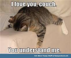 Memes Vault Funny Cat Memes about Love via Relatably.com