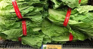 Tainted romaine lettuce sickened 23 in E. coli outbreak, FDA says ...