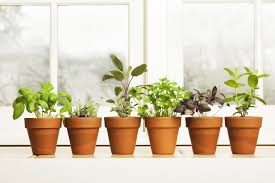 Kitchen Herb Garden Design Indoor Herb Garden Ideas How To Make A Kitchen Herb Garden