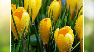 Первые <b>весенние цветы</b> - YouTube