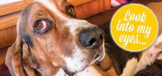 Is Your Dog Manipulating You?   Modern Dog magazine