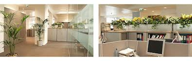 Image Showing Ambius Interior Landscaping In Open Plan Offices  P
