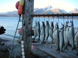 dutch harbor the hub for winter alaska fisheries jobs dutch harbor the hub for winter alaska fisheries jobs alaskafishingjobsnetwork