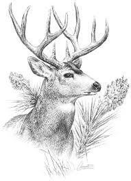 Mule Deer Management in Texas