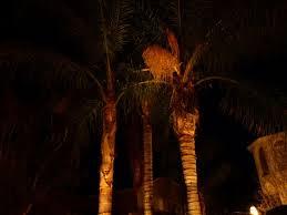 camarillo landscape lighting camarillo landscape lighting up trees camarillo landscape lighting camarillo landscape lighting camarillo landscape lighting