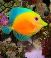 Image result for pics of fish