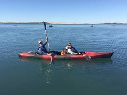 birding travel archives moral compass great places to go where kayaking in the morro bay national estuary preserve winter is birding season in the california
