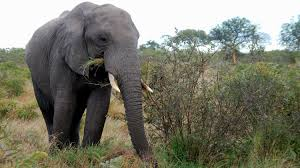 photo essay kruger national park safari kurger safari elephant