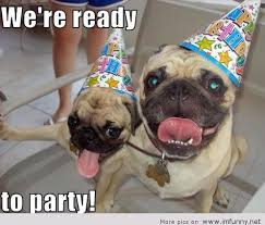 Images happy birthday funny animals via Relatably.com