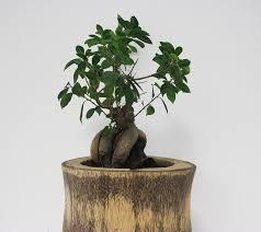 bonsai tree office green plant grow nature bonsai tree for office