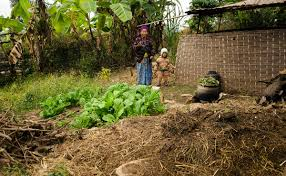 photo essay women are feeding the world modern farmer this w and her grandson live in eastern north of khandbari surrounding her house are scattered garden plots full of saag leafy greens